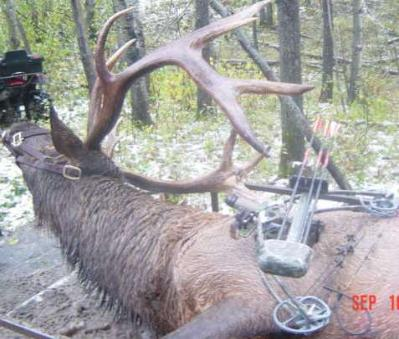 Paz elk hunt bags monster elk with Liberty Archery compound bow.